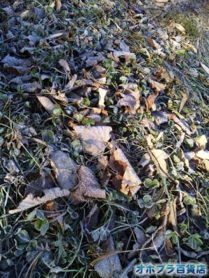 12/2:オホブラ百貨店・落ち葉と霜