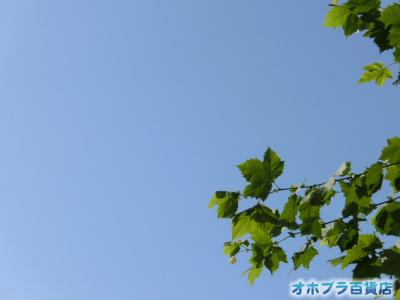 9/1:オホブラ百貨店・今朝の北見市