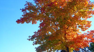 10月15日の街路樹