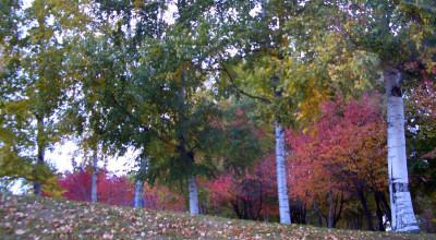 10月18日の東陵公園