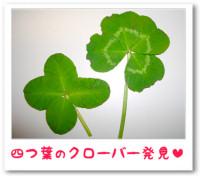 5月29日は幸福の日:四つ葉のクローバー