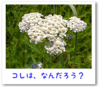 a080701_2.jpg