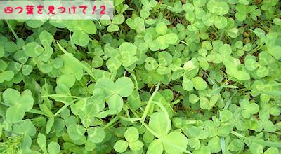 06/02:四つ葉のクローバーを見つけて!