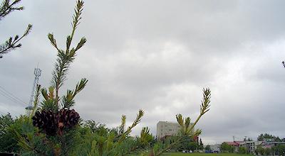 06/16:オホブラ百貨店の事務所の駐車場から見た北見工大方面