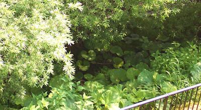06/19:オホブラ百貨店の事務所の屋上からみた景色