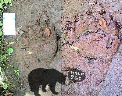 クマの足跡を発見!!