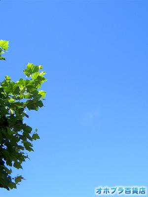 8/19:オホブラ百貨店:オホーツクブルーの空