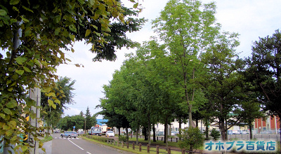 8/23:オホブラ百貨店:小町泉通り