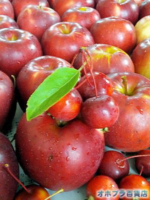 篠根果樹園(北見市昭和)でリンゴ狩り、姫リンゴ