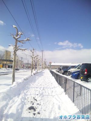 3/8:オホブラ百貨店・南大通りの歩道