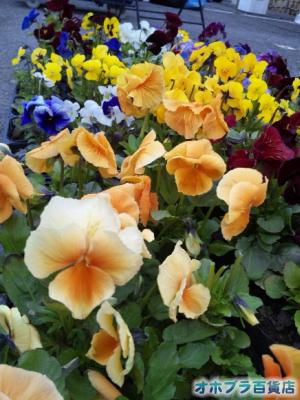 「chou chou Gardenヴィタ」:園芸のタネ・苗・肥料の西