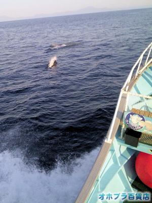 あばしりネイチャークルーズ「クジラ・イルカ・ウミドリウォッチング」
