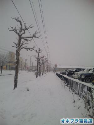 3/7:オホブラ百貨店・たまねぎ倉庫