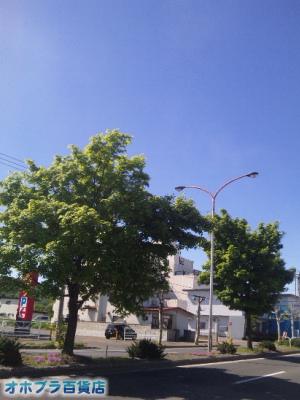 6/11:オホブラ百貨店・今朝の北見市