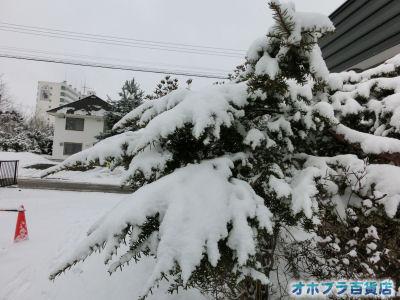 3/31:オホブラ百貨店・今朝