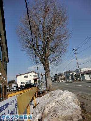 04/04:オホブラ百貨店・今朝の北見市