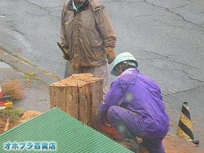 オホブラ百貨店・伐採された街路樹の切り株