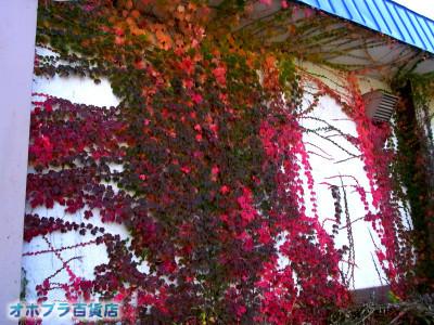1001:オホブラ百貨店・今朝の北見市