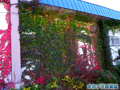 10-06:オホブラ百貨店・今朝の北見市