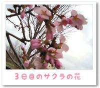 a070511_2.jpg