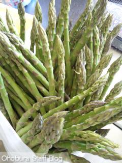グリーンアスパラ収穫体験/本庄農場(美幌町報徳)