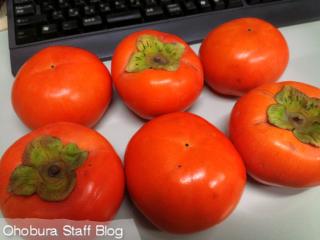頂き物:富有柿